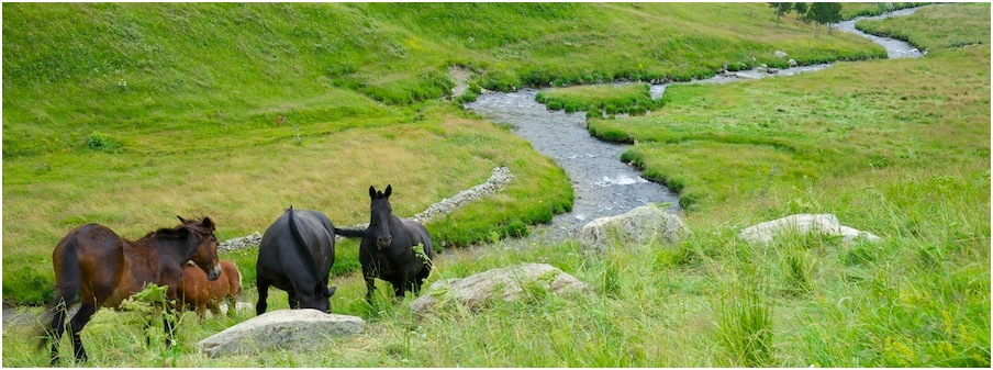 fb-cover-andorra-paarden valley in the north