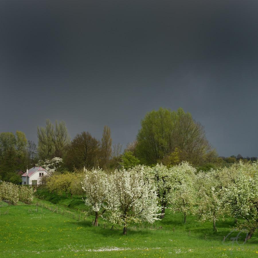 Wijn en verwonderen. Foto in de buurt van Culemborg. Onweersbui boven bomen met bloesem.