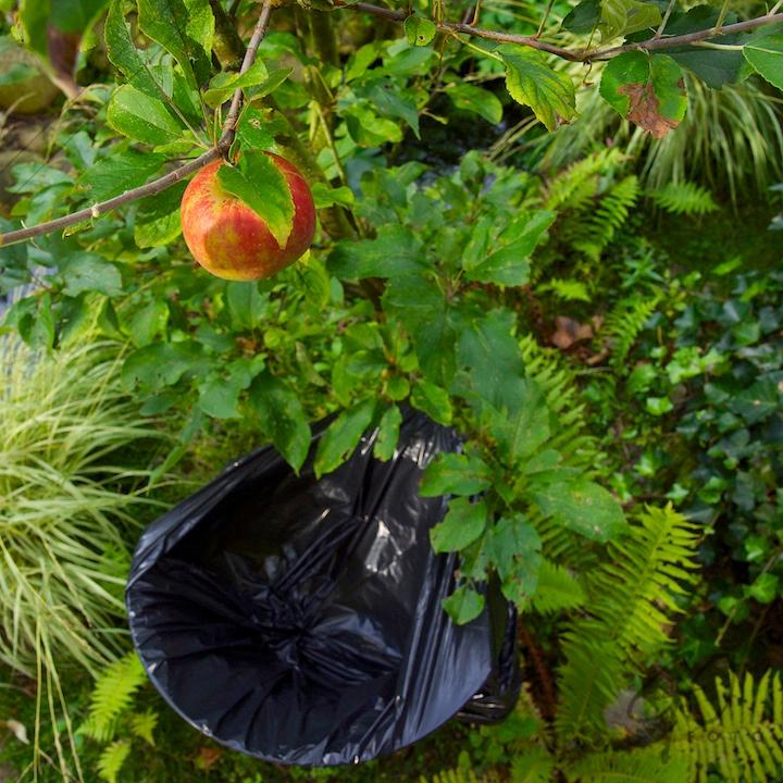 De Appel in de achtertuin vanaf 2012 Appel aan boom met vuilniszak er onder