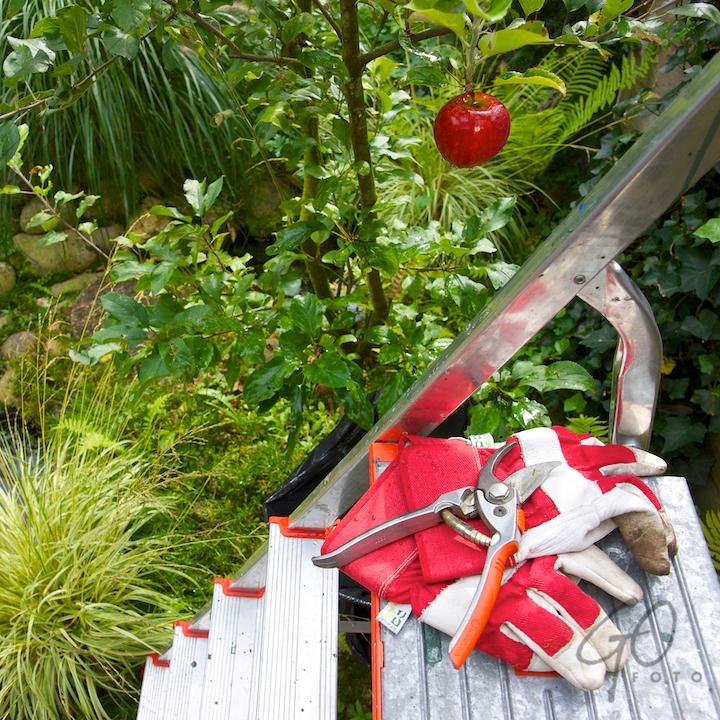 De Appel in de achtertuin vanaf 2012 Appel met snoeischaar.