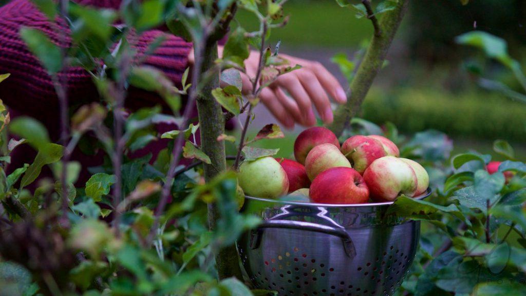 robert-appeltaart-het-proces-1